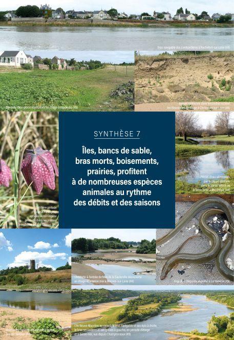 L'essentiel sur la Loire, de la Maine à la mer - Synthèse 7