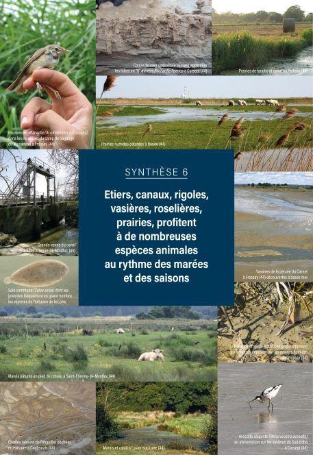 L'essentiel sur la Loire, de la Maine à la mer - Synthèse 6