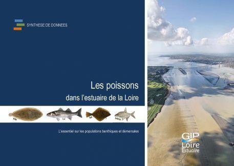 Nouvelle publication : Les poissons dans l'estuaire de la Loire