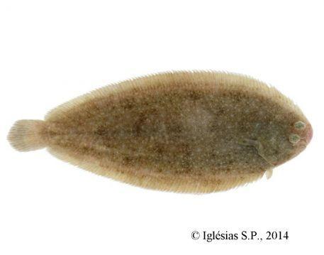 Mise à jour du suivi de l'ichtyofaune