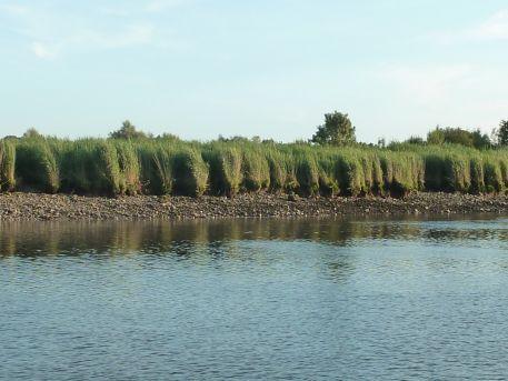 Roselière et berge enrochée de la section endiguée de l'estuaire de la Loire